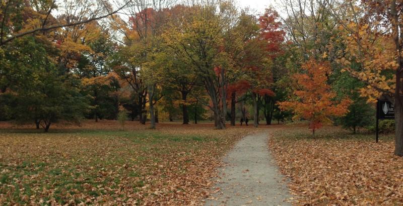 Fall in Arnold Arboretum