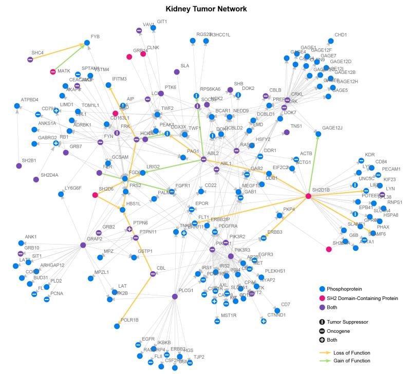 Kidney Cancer Network